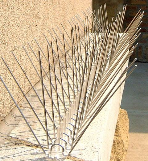 Bird Spikes And Wall Spikes Applications With Specifications