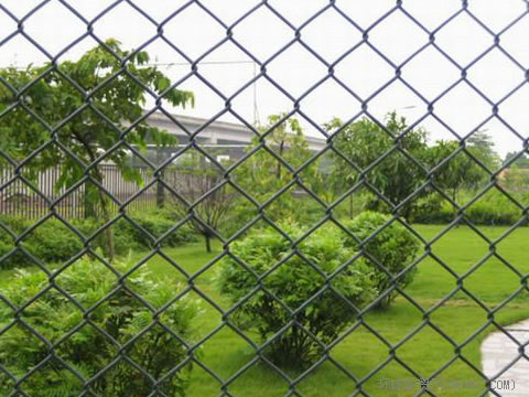 Chain link fences are installed outside of the park and several trees and plants in the park.