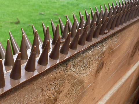 Plastic Wall Spikes As Bird Spikes On The Wall For Anti