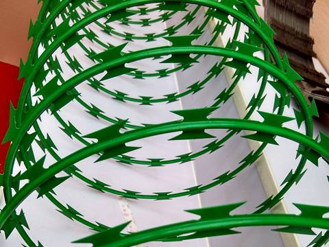 A roll of spiral razor barbed wire painted green color on the white back ground.